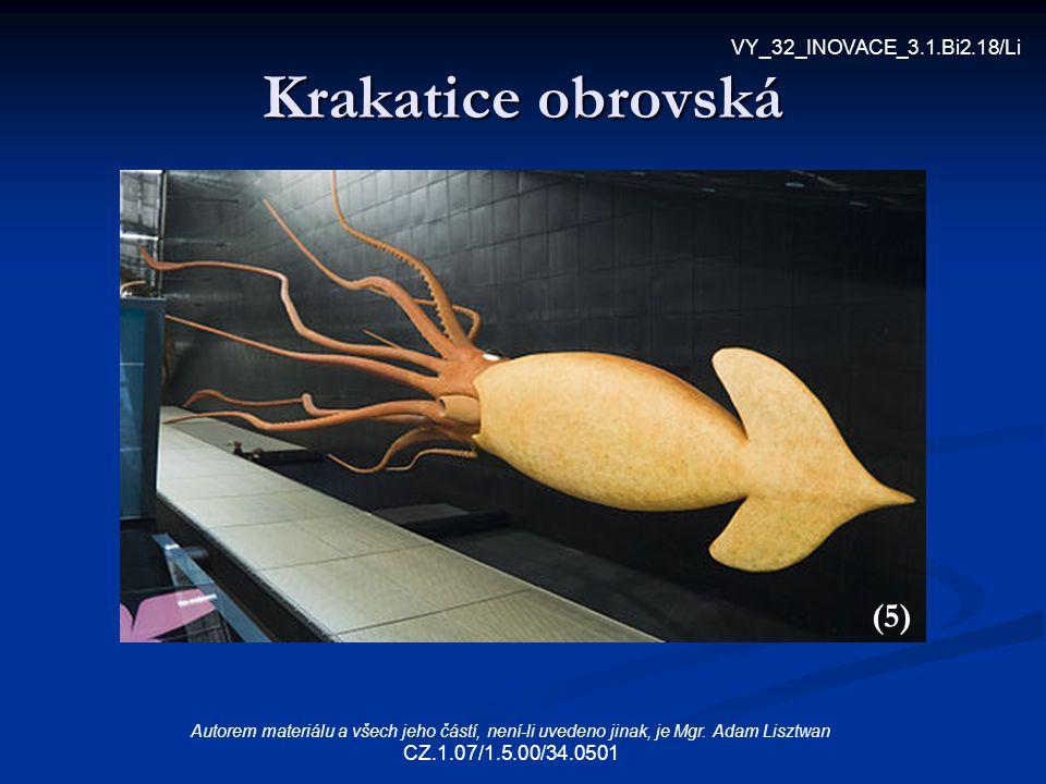 Krakatice obrovská (5) VY_32_INOVACE_3.1.Bi2.18/Li