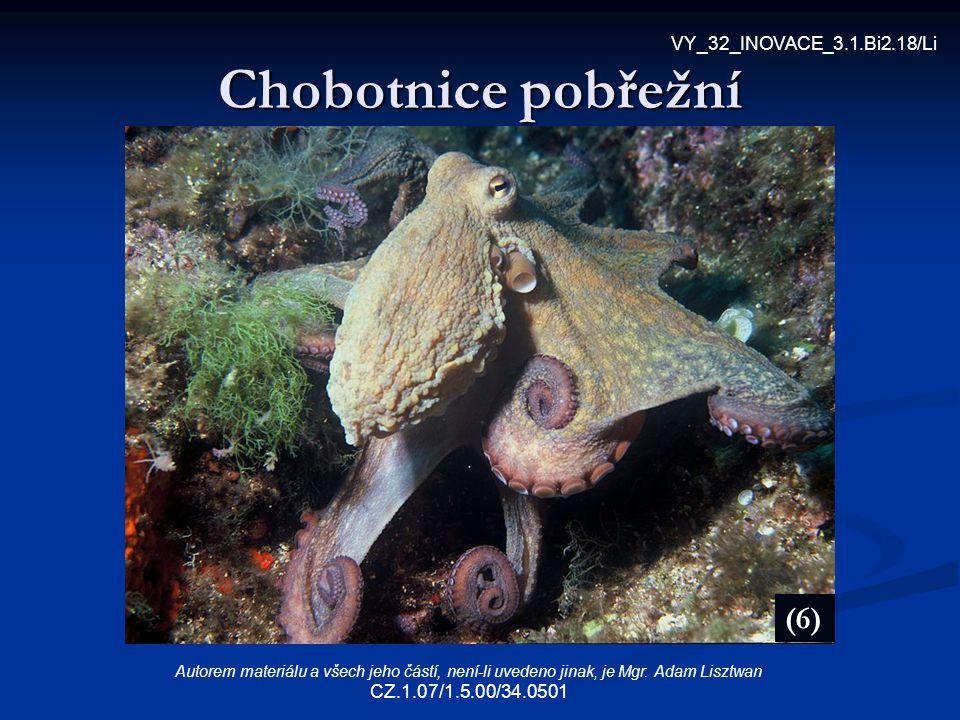 Chobotnice pobřežní (6) VY_32_INOVACE_3.1.Bi2.18/Li