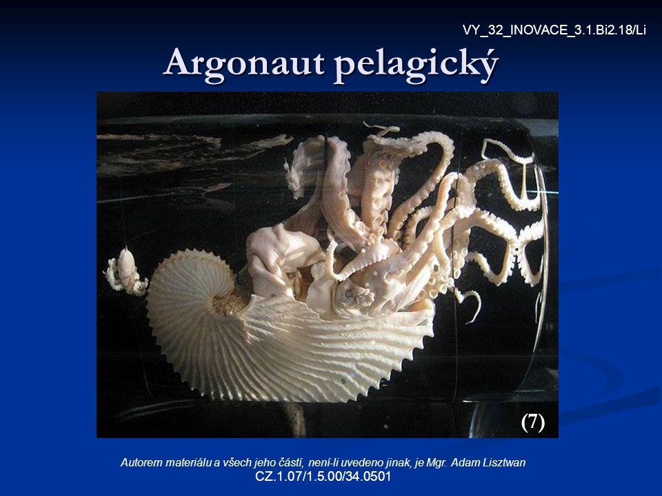 Argonaut pelagický (7) VY_32_INOVACE_3.1.Bi2.18/Li