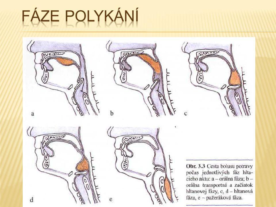Fáze polykání