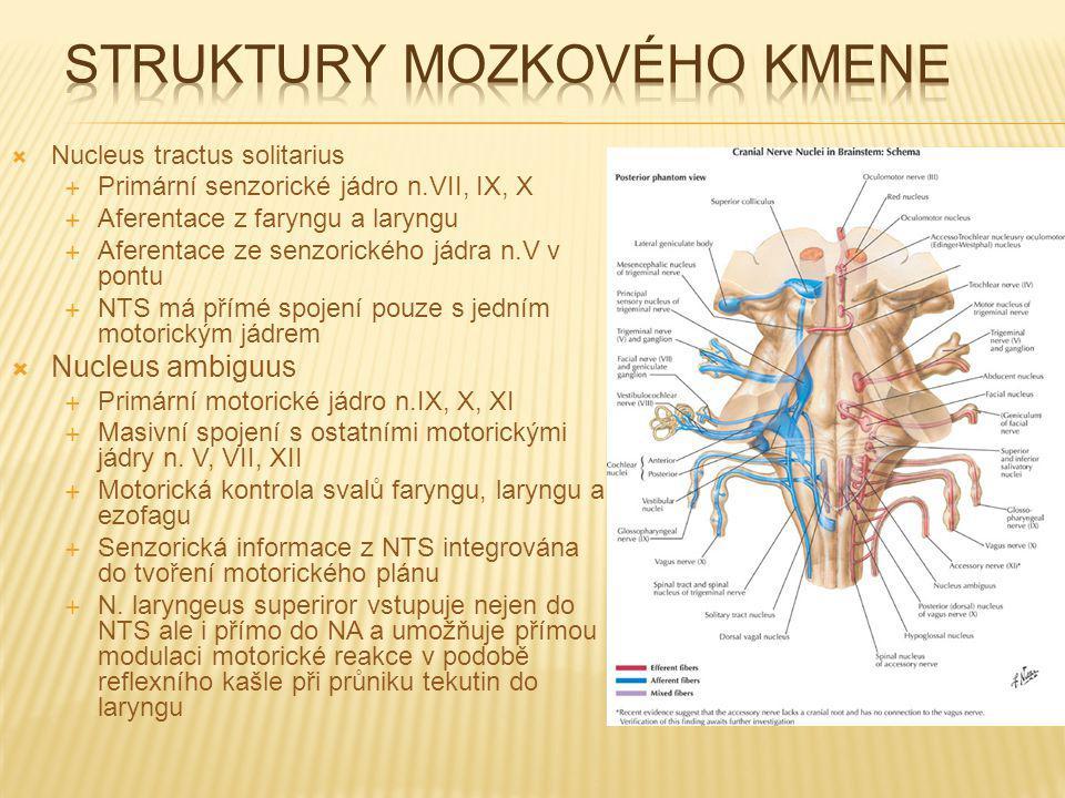 Struktury mozkového kmene