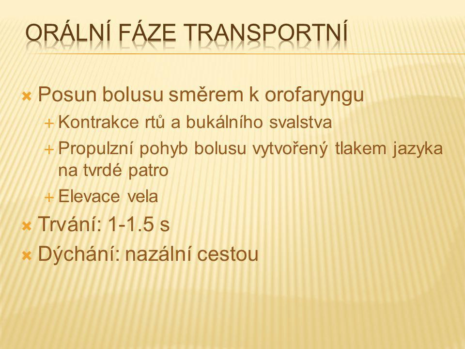 Orální fáze transportní