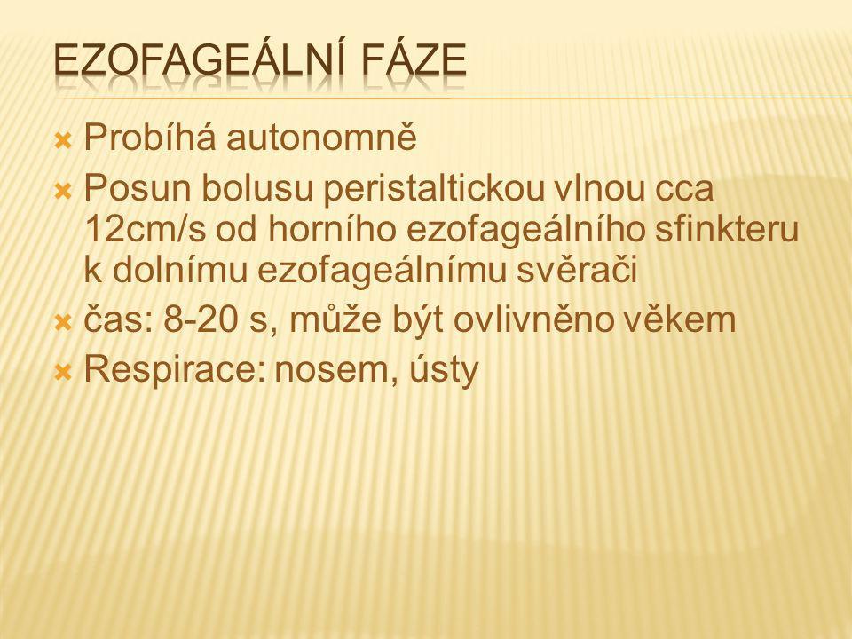 Ezofageální fáze Probíhá autonomně
