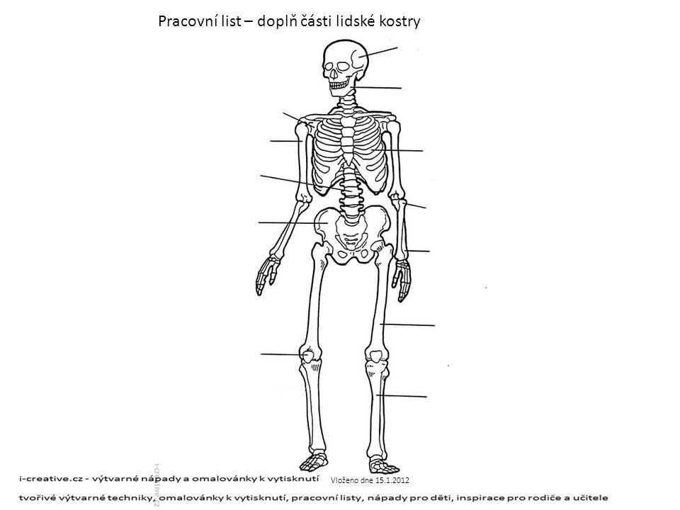 Pracovní list – doplň části lidské kostry