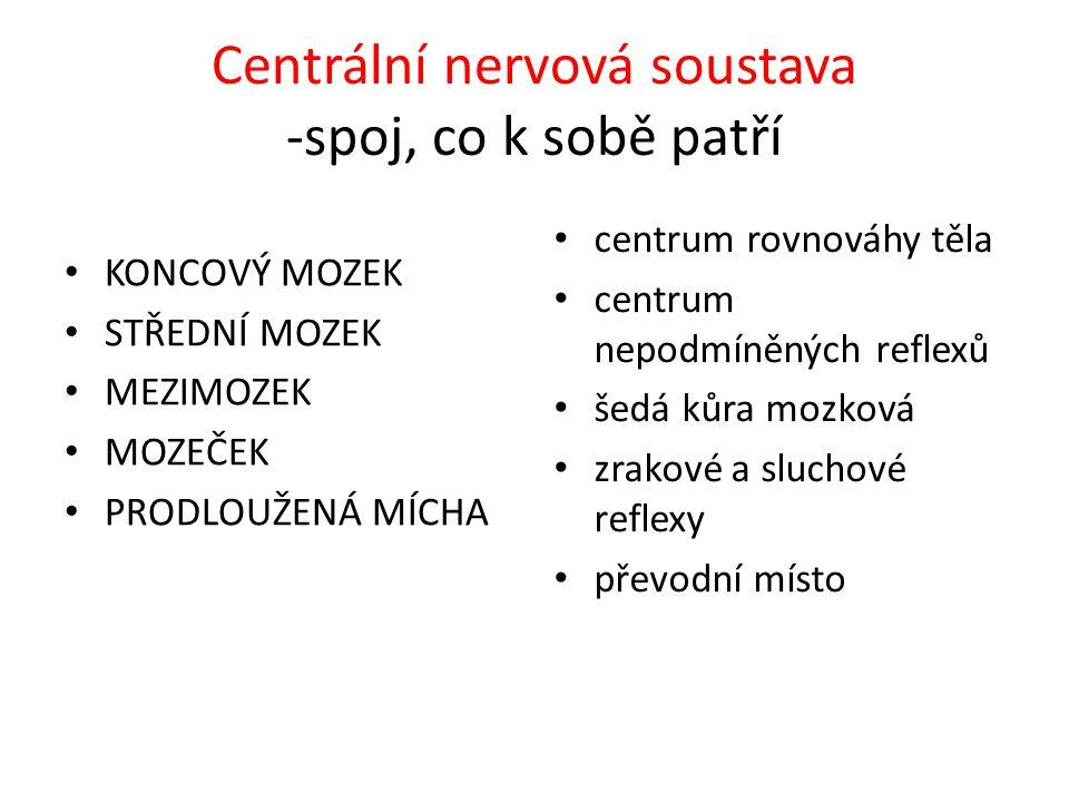 Centrální nervová soustava -spoj, co k sobě patří