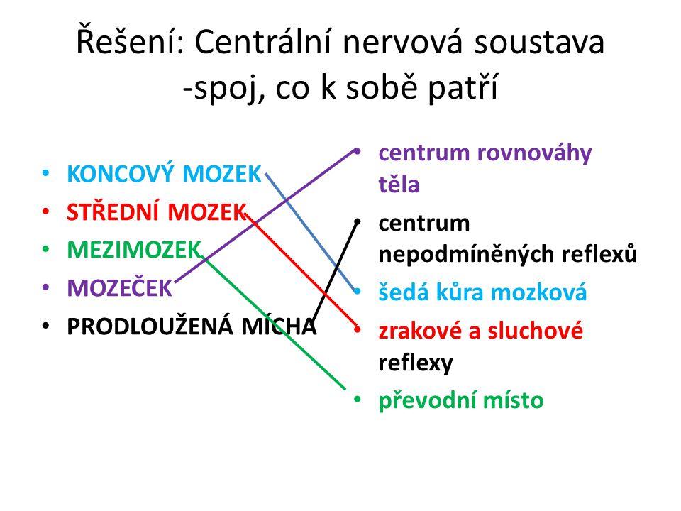 Řešení: Centrální nervová soustava -spoj, co k sobě patří
