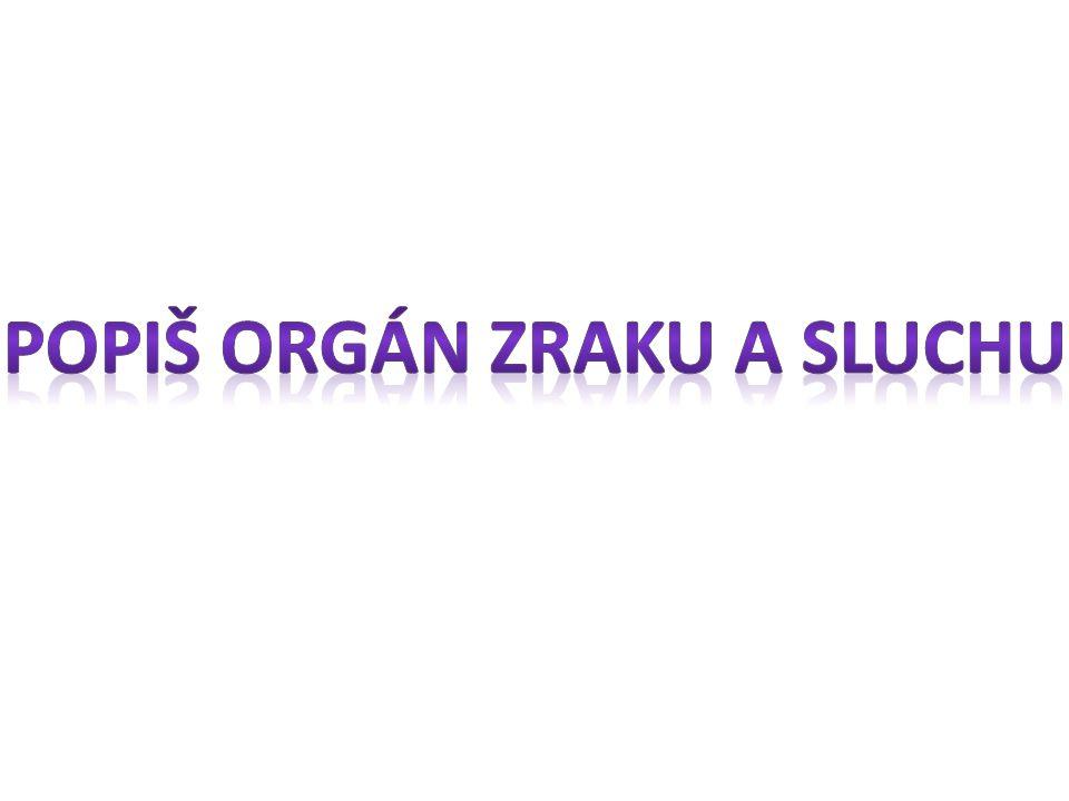 Popiš orgán zraku a sluchu