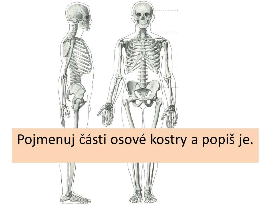 Pojmenuj části osové kostry a popiš je.