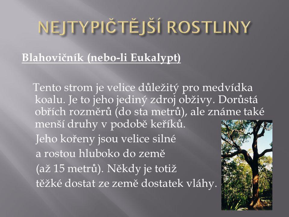 NEJTYPIČTĚJŠÍ ROSTLINY