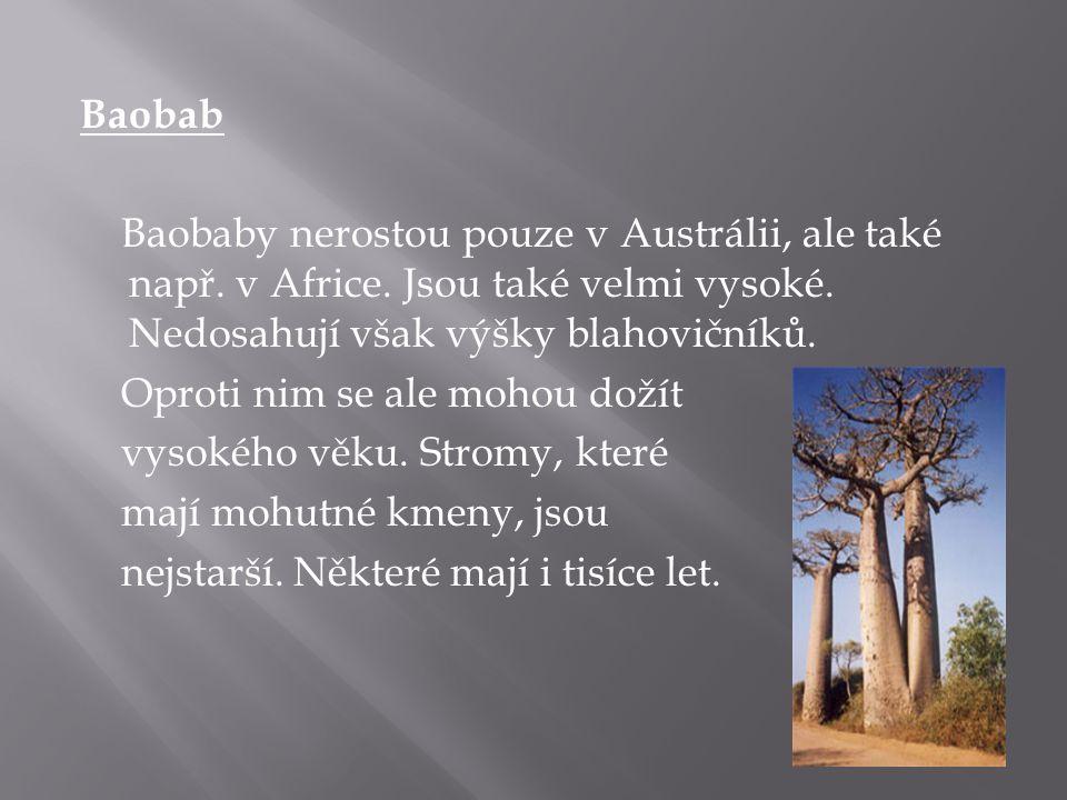 Baobab Baobaby nerostou pouze v Austrálii, ale také např. v Africe