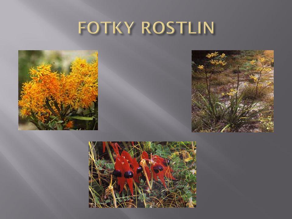 FOTKY ROSTLIN