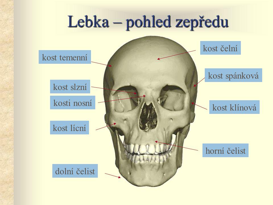 Lebka – pohled zepředu kost čelní kost temenní kost spánková