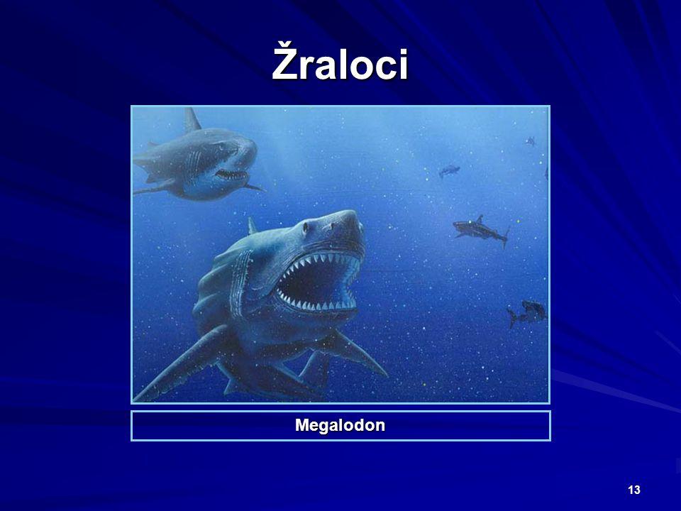 Žraloci Megalodon