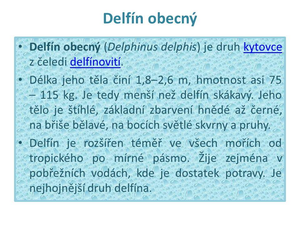 Delfín obecný Delfín obecný (Delphinus delphis) je druh kytovce z čeledi delfínovití.