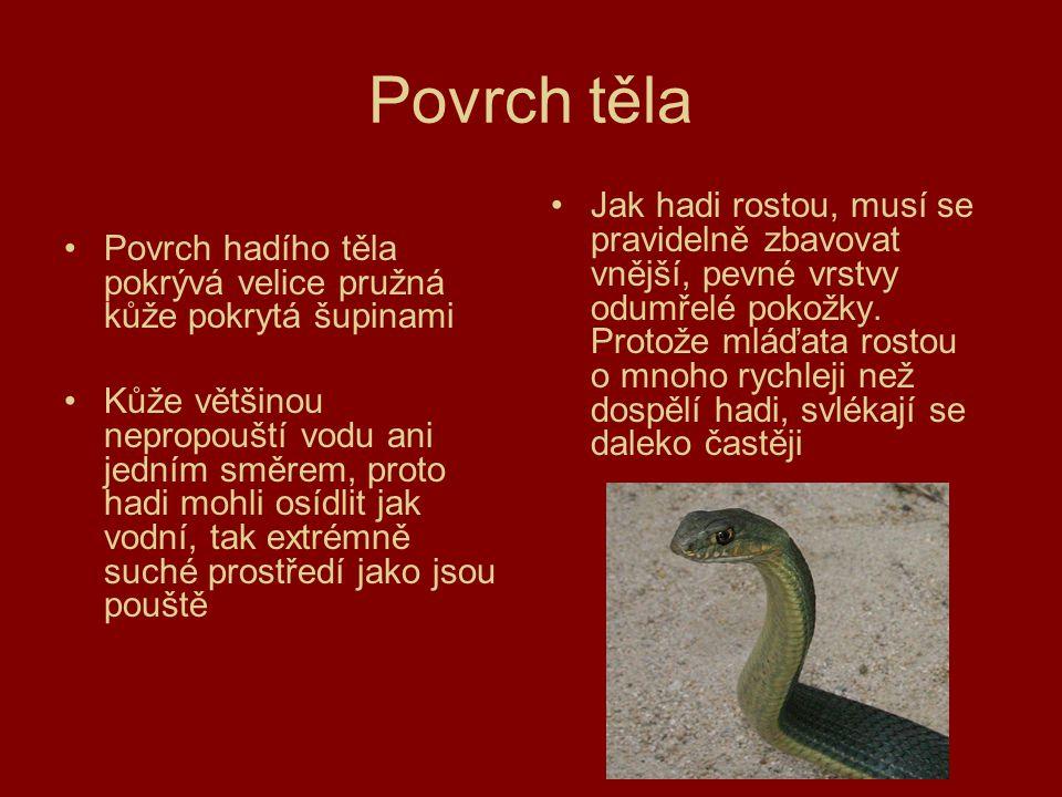 Povrch těla Povrch hadího těla pokrývá velice pružná kůže pokrytá šupinami.