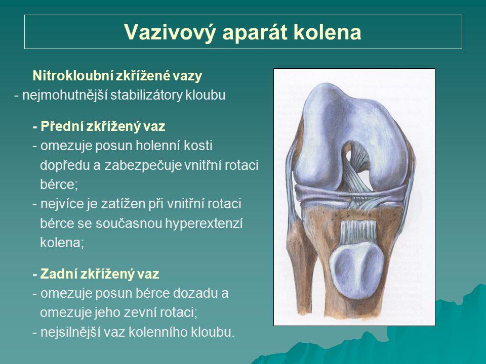 Vazivový aparát kolena