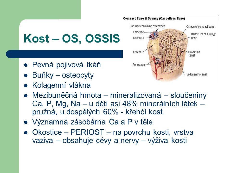 Kost – OS, OSSIS Pevná pojivová tkáň Buňky – osteocyty