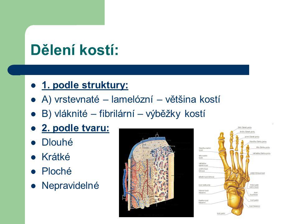Dělení kostí: 1. podle struktury: