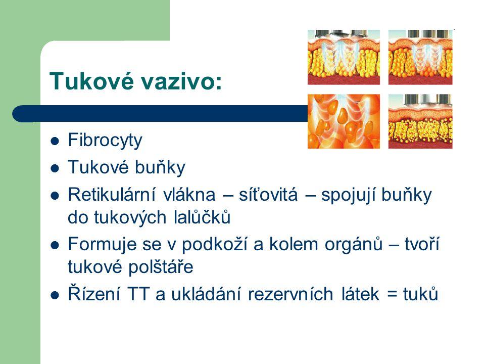 Tukové vazivo: Fibrocyty Tukové buňky