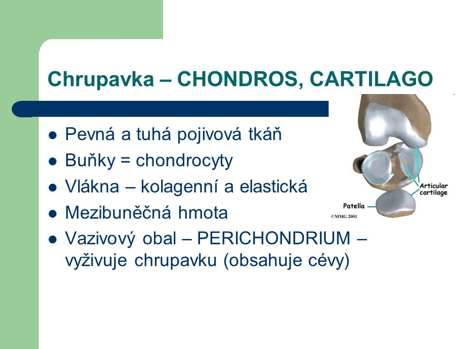 Chrupavka – CHONDROS, CARTILAGO