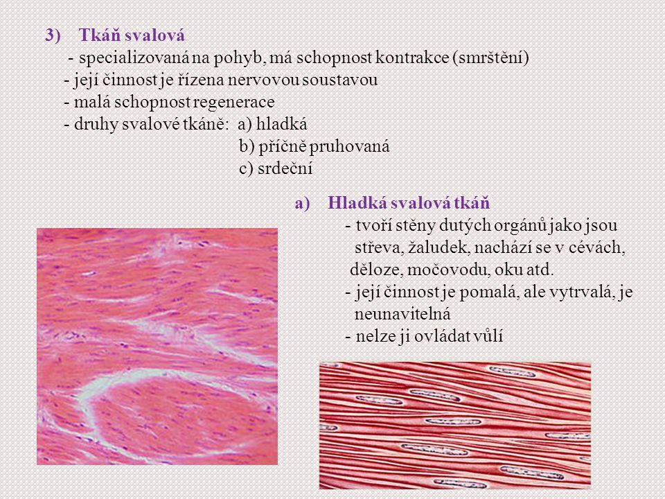Tkáň svalová - specializovaná na pohyb, má schopnost kontrakce (smrštění) - její činnost je řízena nervovou soustavou.