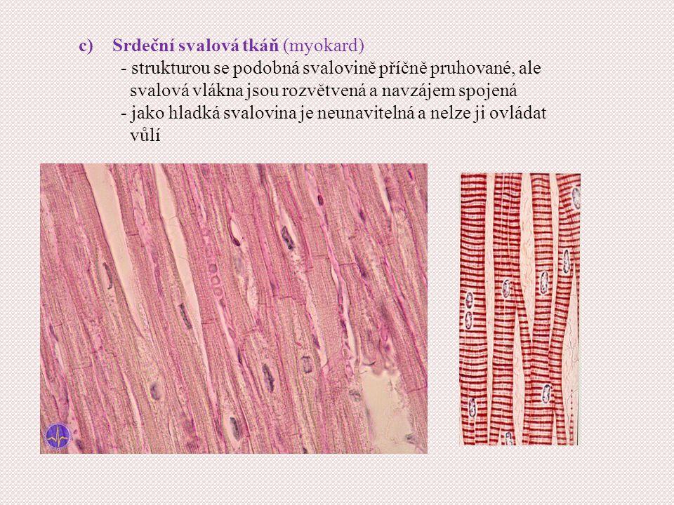 Srdeční svalová tkáň (myokard)