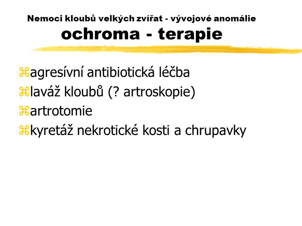 Nemoci kloubů velkých zvířat - vývojové anomálie ochroma - terapie