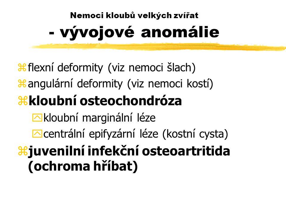 Nemoci kloubů velkých zvířat - vývojové anomálie