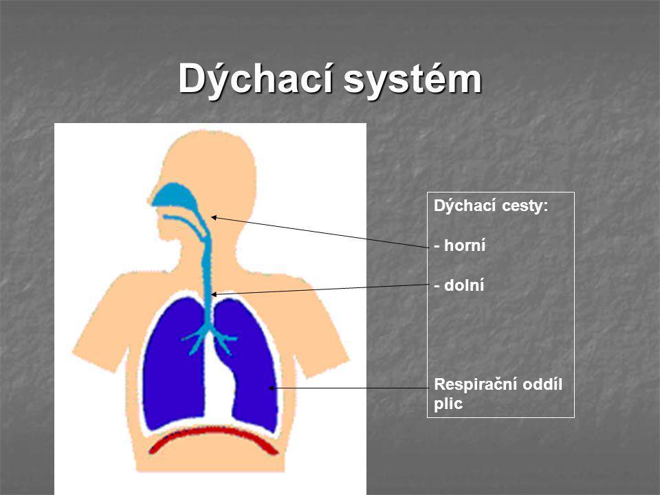 Dýchací systém Dýchací cesty: - horní - dolní Respirační oddíl plic