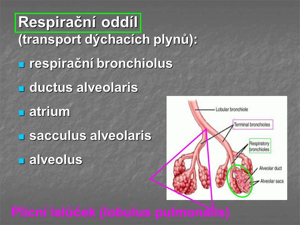 Respirační oddíl (transport dýchacích plynů):