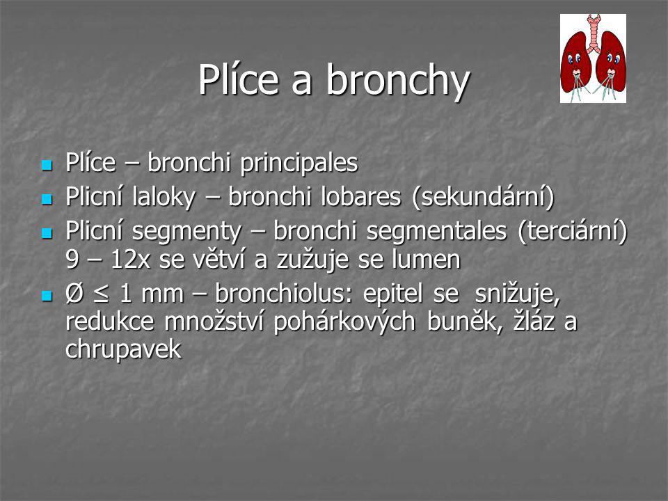 Plíce a bronchy Plíce – bronchi principales