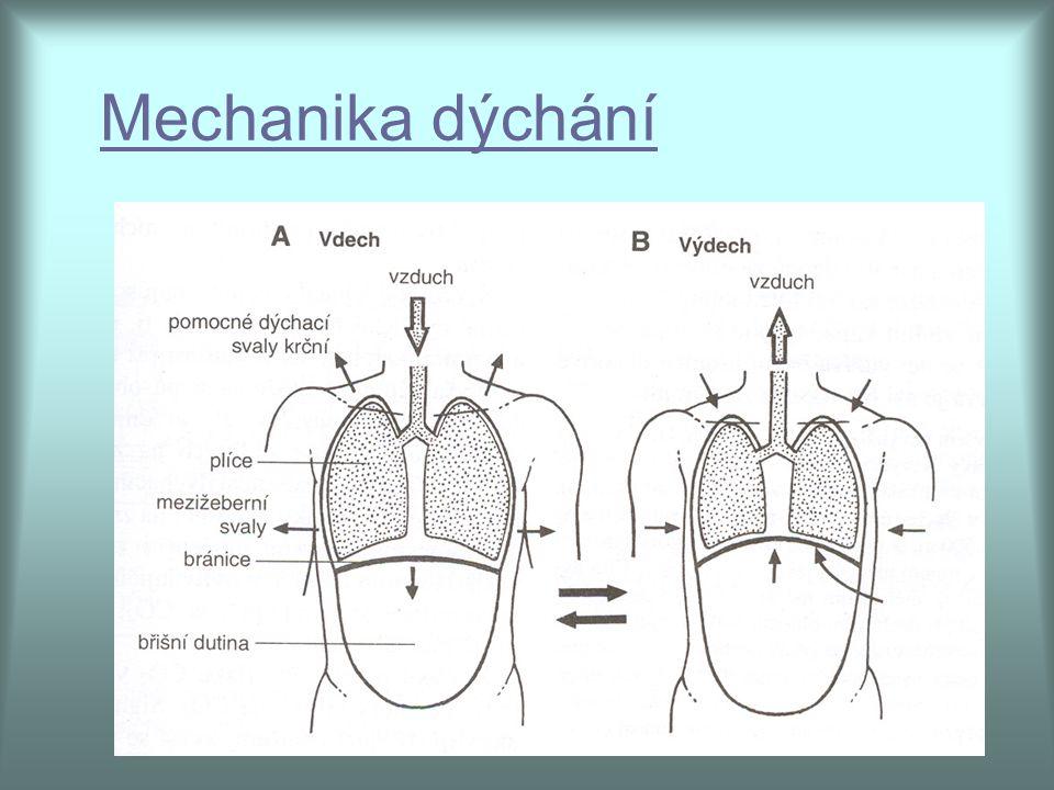 Mechanika dýchání