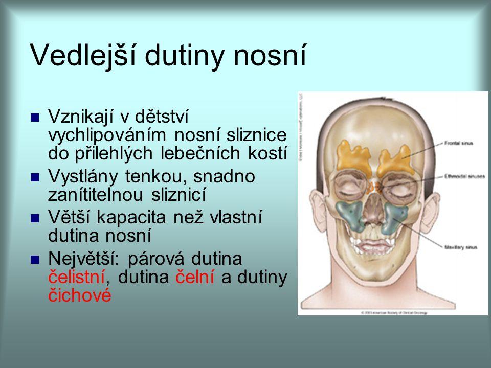 Vedlejší dutiny nosní Vznikají v dětství vychlipováním nosní sliznice do přilehlých lebečních kostí.