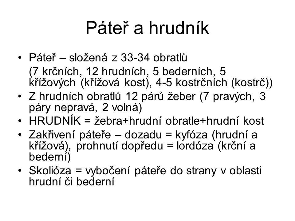 Páteř a hrudník Páteř – složená z 33-34 obratlů