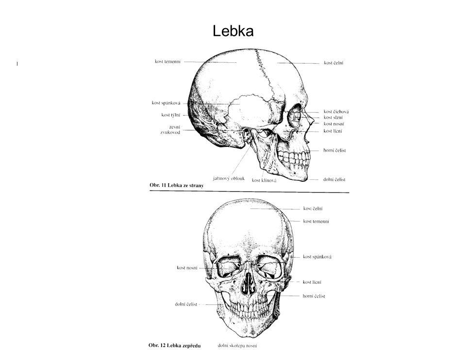 Lebka I