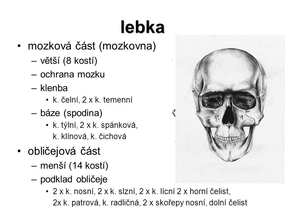 lebka mozková část (mozkovna) obličejová část větší (8 kostí)