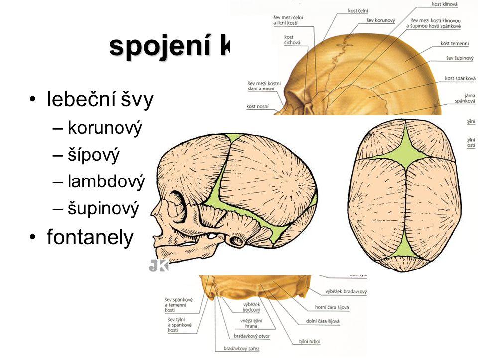 spojení kostí lebky lebeční švy fontanely korunový (věncový) šípový