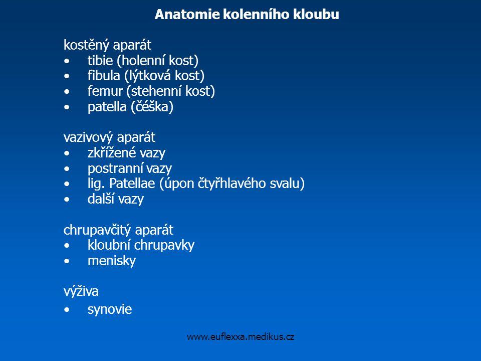 Anatomie kolenního kloubu