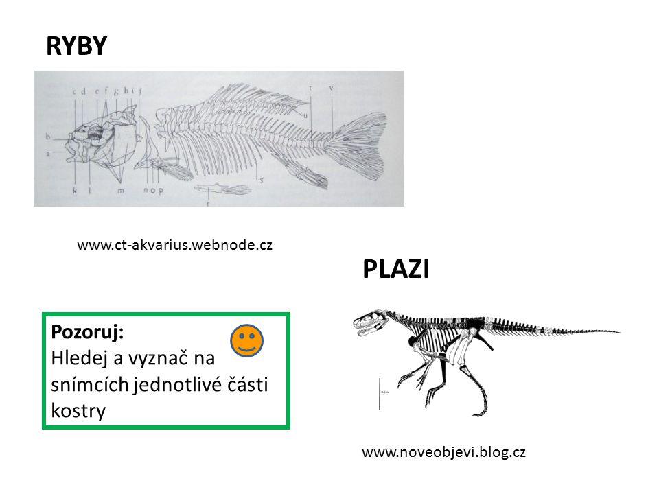 RYBY www.ct-akvarius.webnode.cz. PLAZI. Pozoruj: Hledej a vyznač na snímcích jednotlivé části kostry.