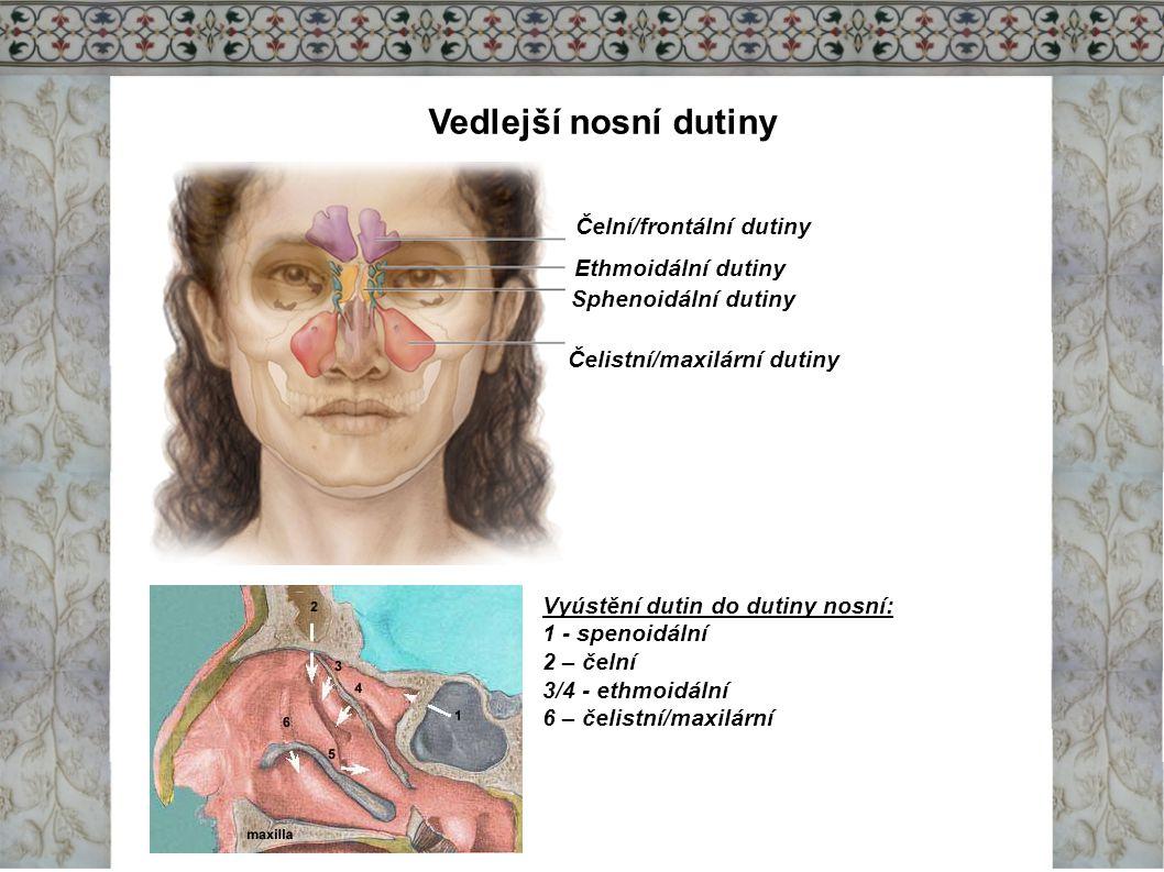 Vedlejší nosní dutiny Čelní/frontální dutiny Ethmoidální dutiny