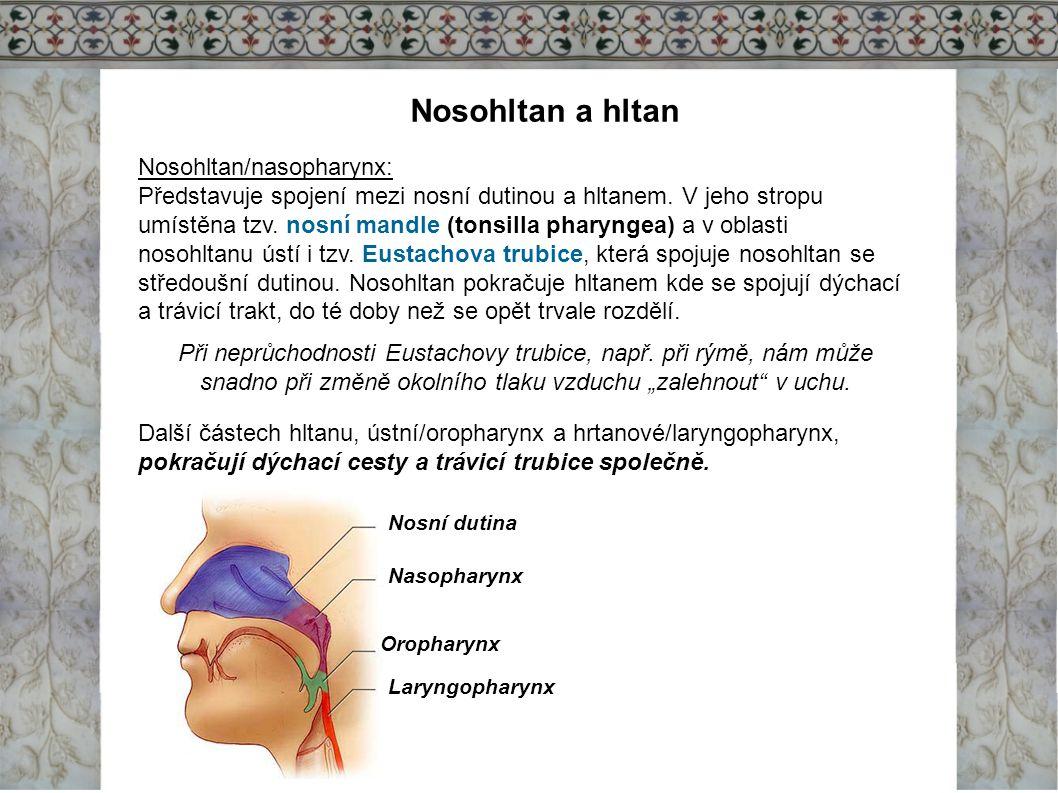 Nosohltan a hltan Nosohltan/nasopharynx: