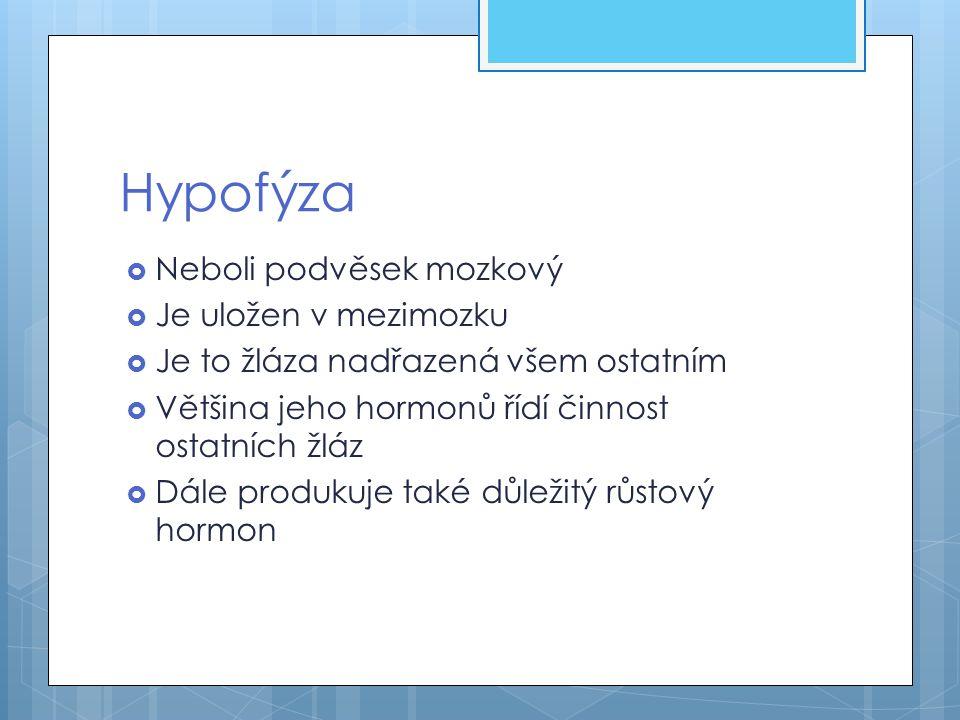 Hypofýza Neboli podvěsek mozkový Je uložen v mezimozku