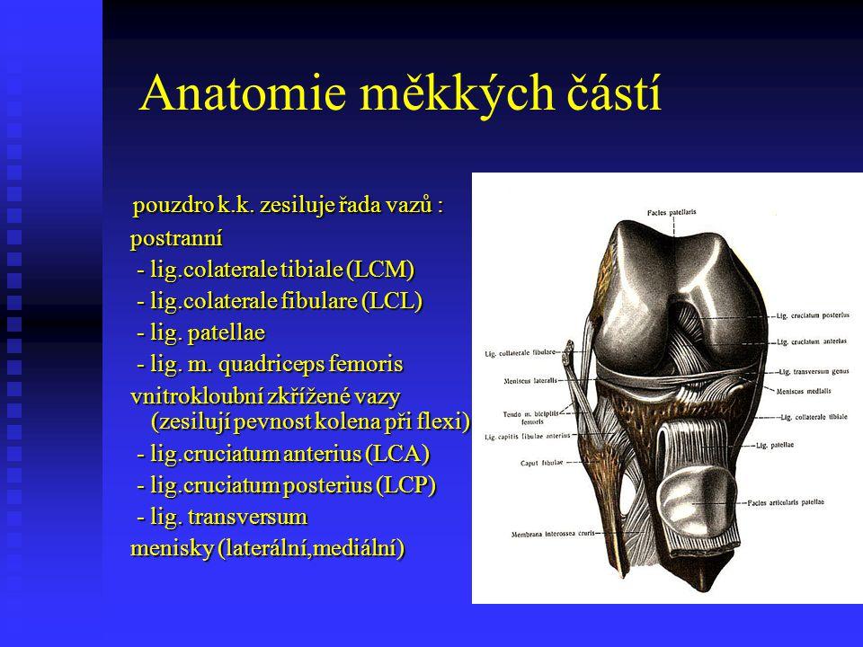 Anatomie měkkých částí