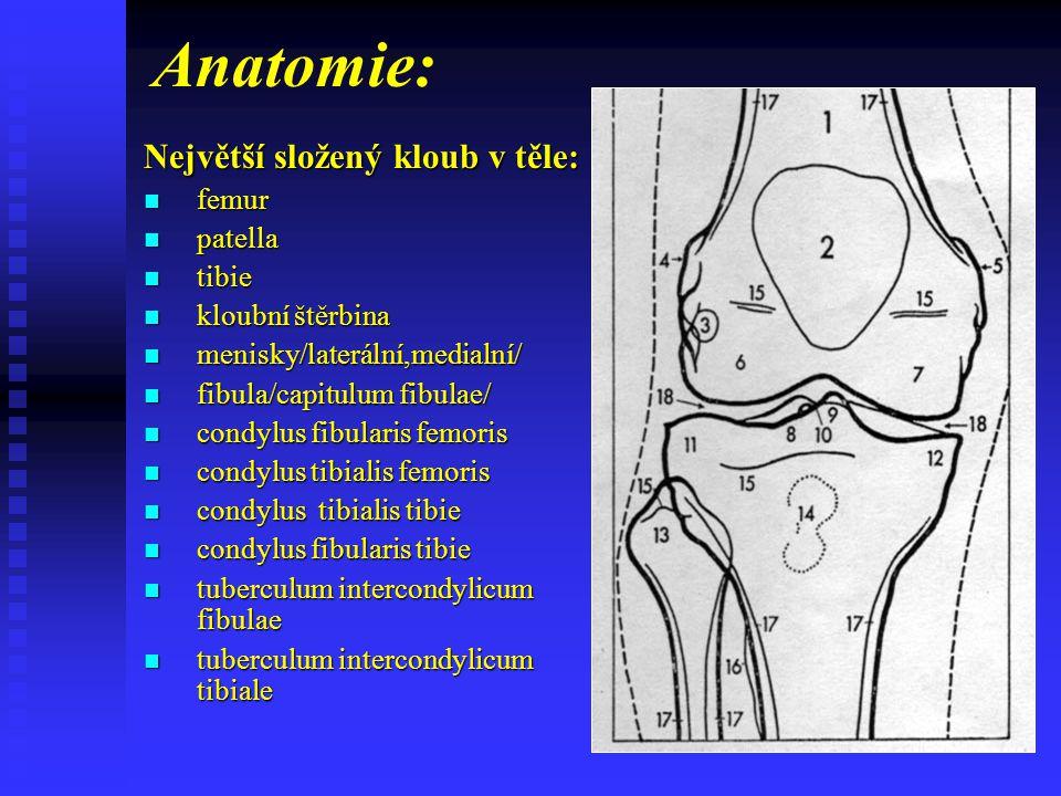 Anatomie: Největší složený kloub v těle: femur patella tibie