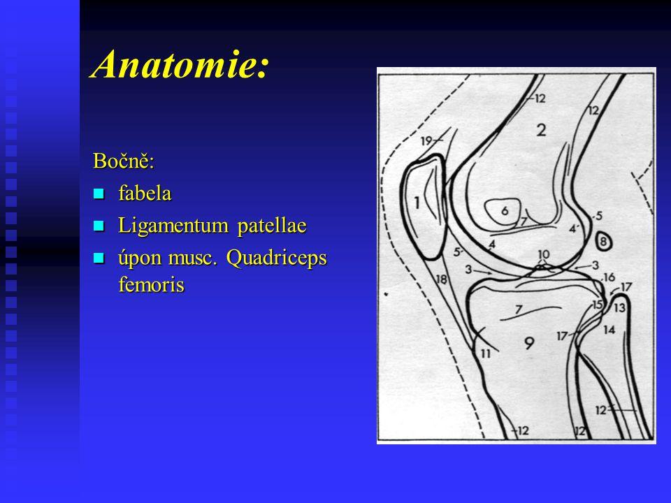 Anatomie: Bočně: fabela Ligamentum patellae