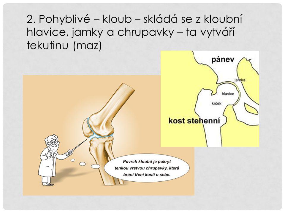 2. Pohyblivé – kloub – skládá se z kloubní hlavice, jamky a chrupavky – ta vytváří tekutinu (maz)