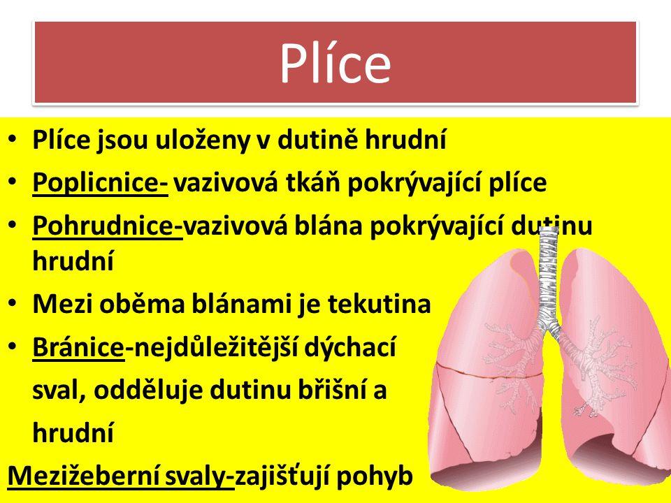 Plíce Plíce jsou uloženy v dutině hrudní