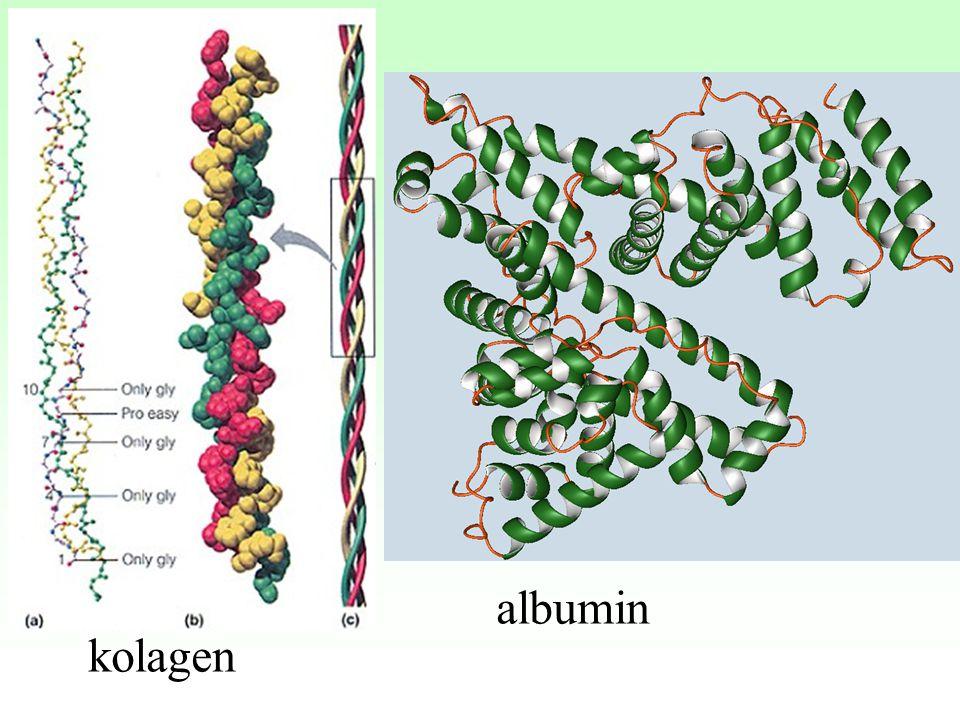 albumin kolagen