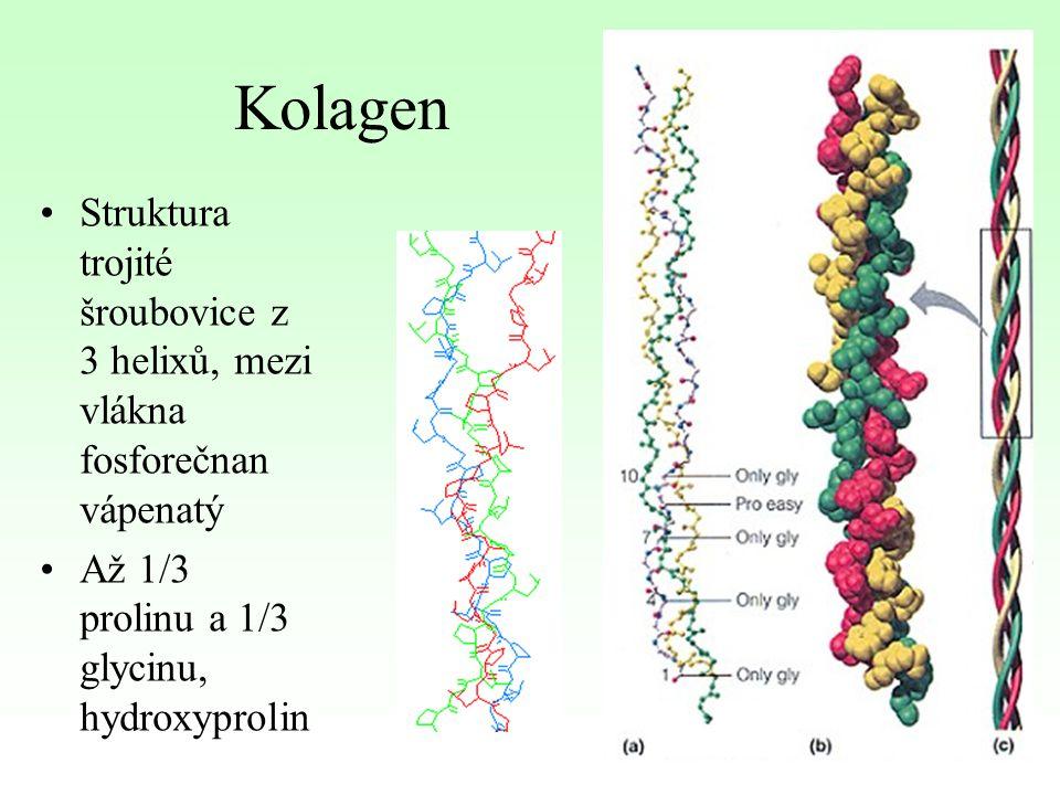 Kolagen Struktura trojité šroubovice z 3 helixů, mezi vlákna fosforečnan vápenatý.