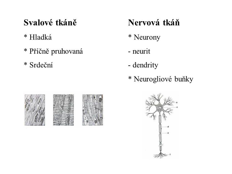 Svalové tkáně Nervová tkáň Hladká Příčně pruhovaná Srdeční Neurony